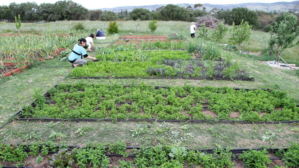 fermentAsian Garden