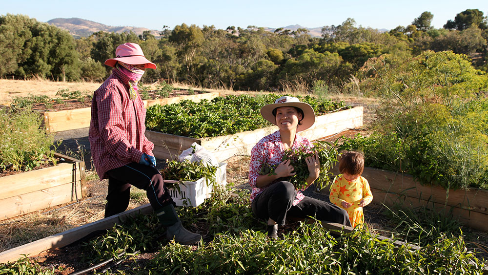 The family in the garden